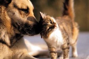 gato-cachorro-grande
