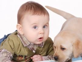 Apresentando o cachorro a um bebê